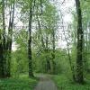 Лесные участки в чеховском районе, Хлевино