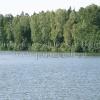 Участки на берегу пруда в Подмосковье Голыгино