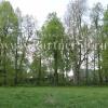 Участки с лесными деревьями в Подмосковье